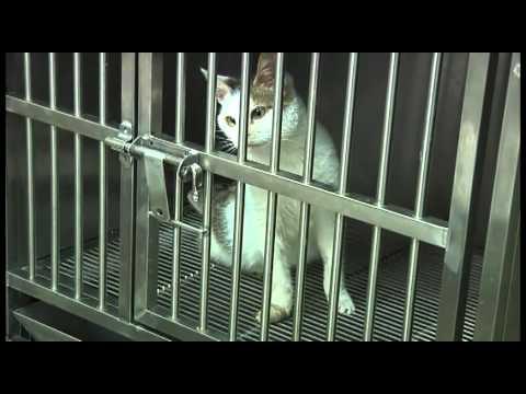 台北市動物保護處TNR宣導片-王心如