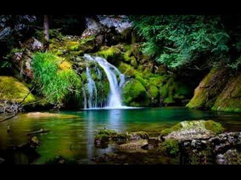 SUBLIME RIVIERE, Cascade Forêt et Oiseaux pour Faire le Vide, se Détendre ou Dormir Paisiblement