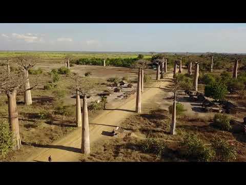 [Videoclip] 바오밥거리 항공촬영 (Baobab Avenue, Morondava, Madagascar)