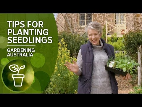 Practical tips and tricks for planting seedlings to ensure they survive and thrive