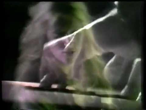 Stevie Wonder - Superstition (1972)