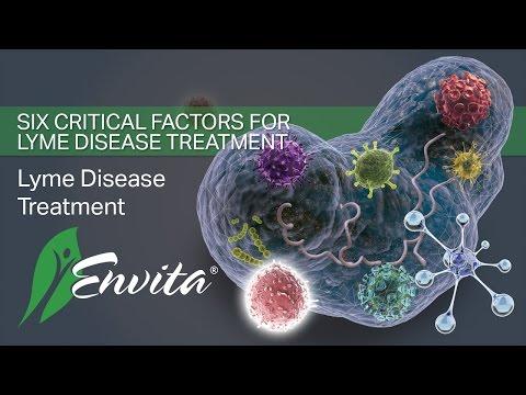 The Critical Factors to Proper Lyme Disease Treatment | Envita