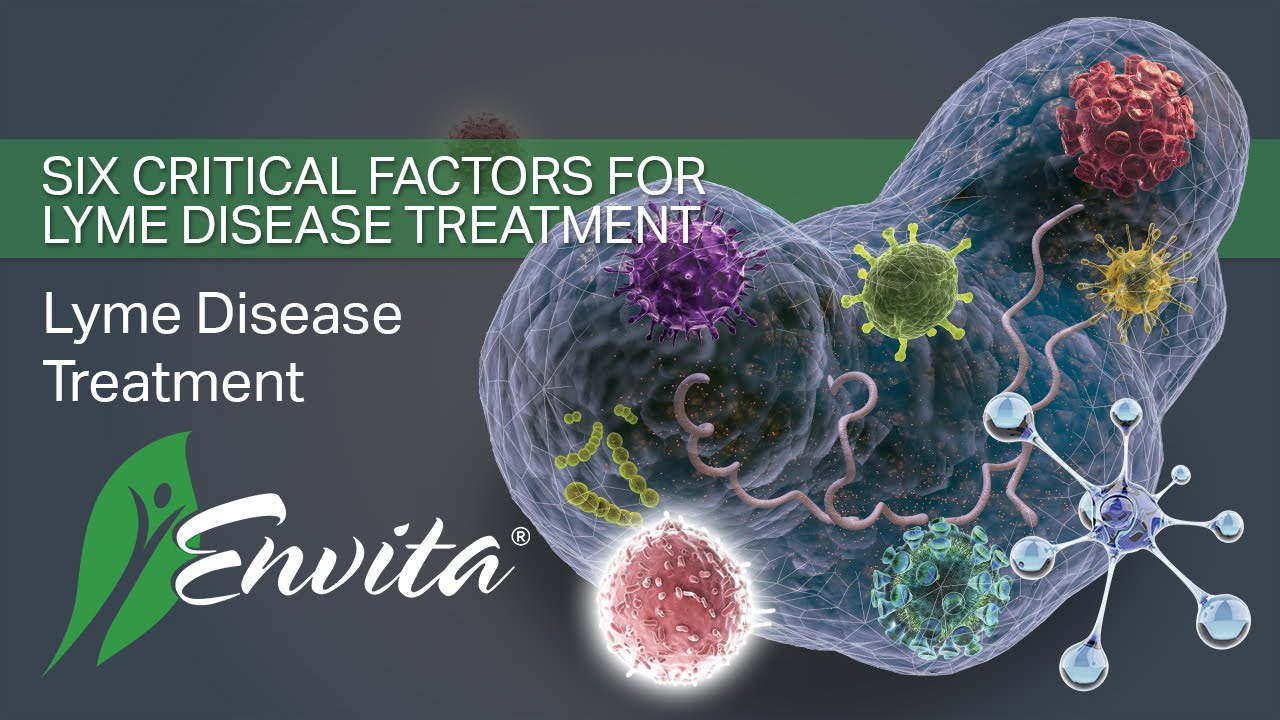 The Critical Factors to Proper Lyme Disease Treatment | Envita
