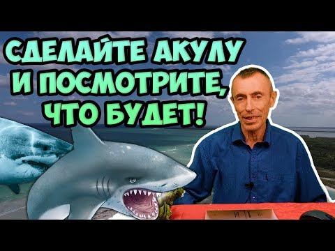 Упражнение акула как делать видео