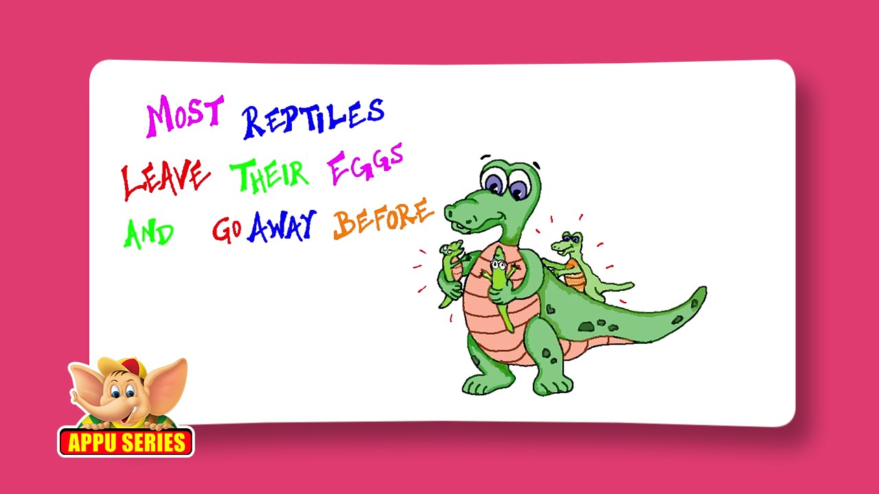 Fun Facts About Reptiles - YouTube