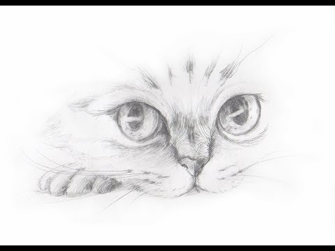 Вопрос: Как нарисовать кота?