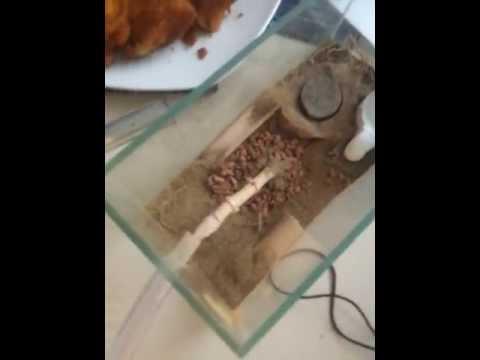 Ameisenbau - selbstversuch