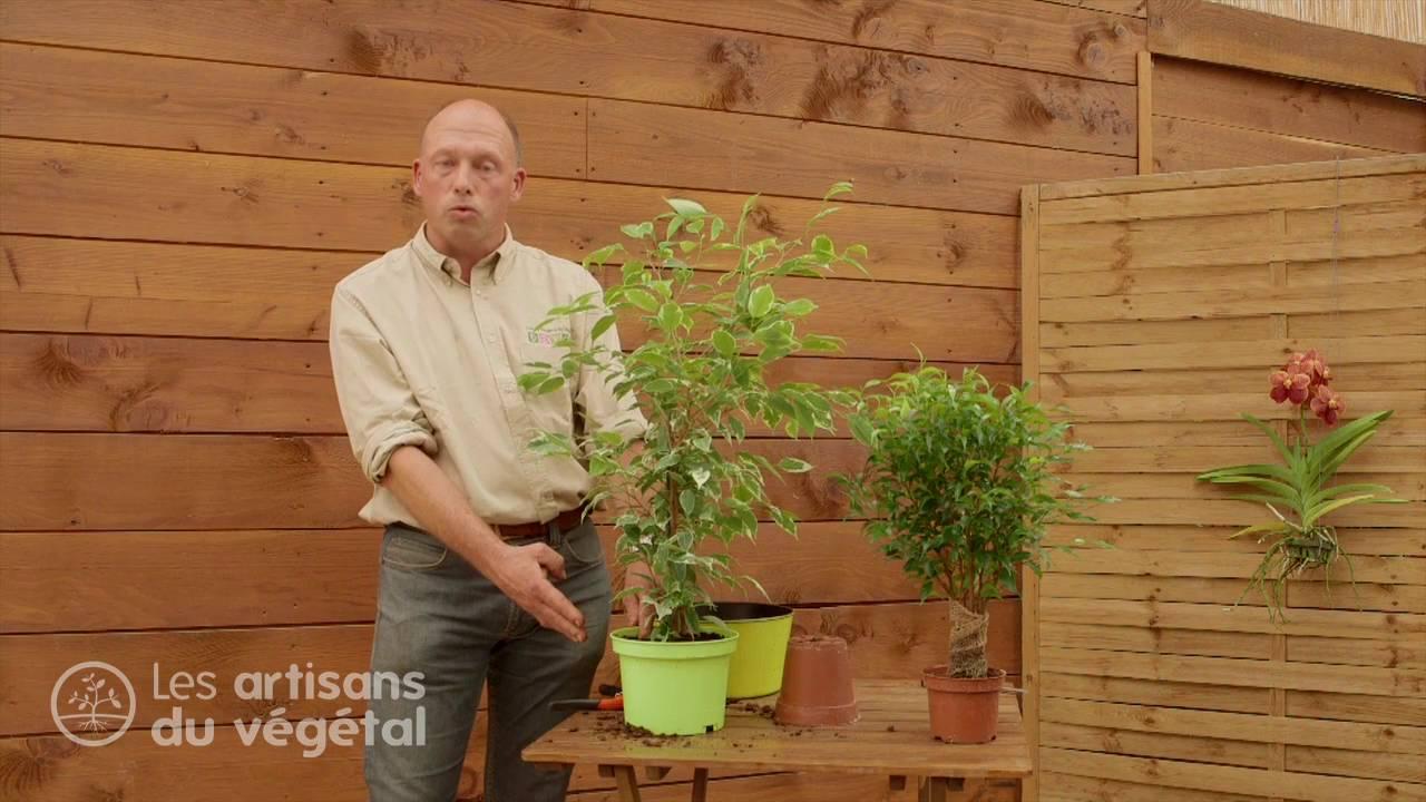 comment rempoter une plante verte l 39 exemple du ficus youtube. Black Bedroom Furniture Sets. Home Design Ideas
