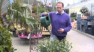 Weekly gardening tips: Week 8