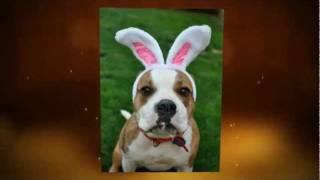 Texas American Bulldog Rescue - The Face Of Rescue