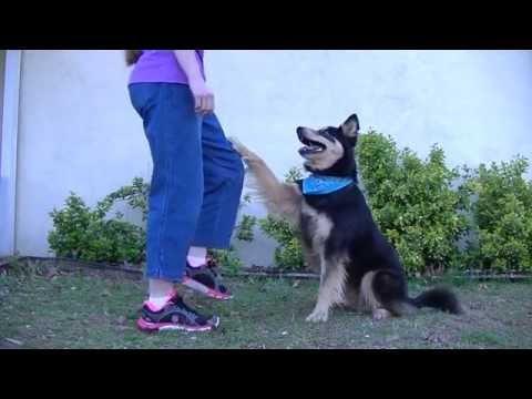 Dog Tricks in Slow Motion! WATCH IN HD