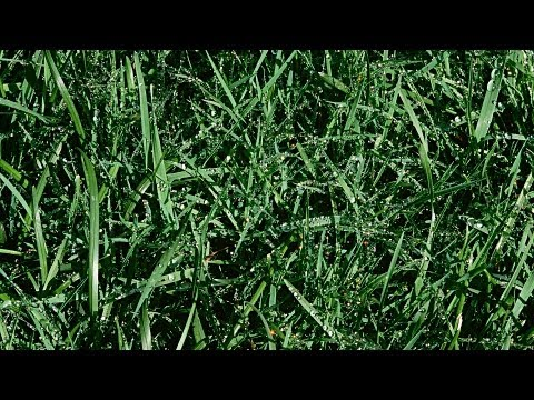 5 Landscaping Tips | Lawn & Garden Care