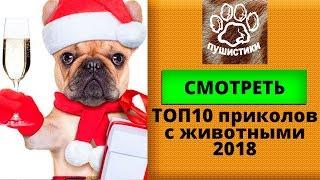ТОП 10 приколов  с животными 2018 года (Год собаки)