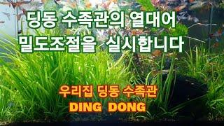 우리집 딩동 수족관의 열대어  밀도조절  -  딩동수족…