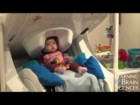 Bilingual and monolingual baby brains differ in response to language