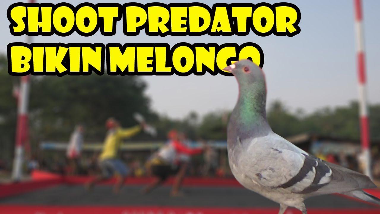 Amazing Shoot Predator Kenwood Team Pekalongan By Merpati Lovers