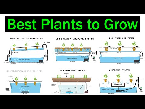 Which Hydroponic System is Better for Plants | Crops | Best Plants to Grow | Types of Hydroponics