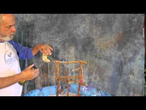 FUN LOVING & ENERGETIC BLACK-HEADED CAIQUE PARROTS