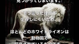 【衝撃】アルビノ(人間)狩りと黒人の関係!惨劇な「アルビノ狩り」は終わらない~タンザニア~ アルビノ 検索動画 19