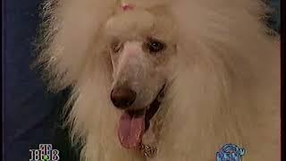 Я и моя собака. Дог-шоу. 1995год.