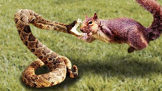 Brave Squirrel Fights and Takes Down Snake! The Best Intense Battle in Wild