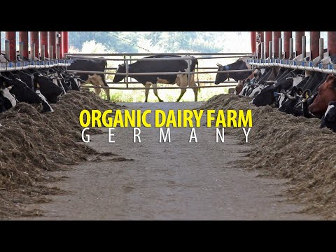 Organic Milk in Germany on a 50 unit Rotary - (Biolandbetrie