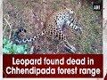 Leopard Found Dead In Chhendipada Forest Range mp3