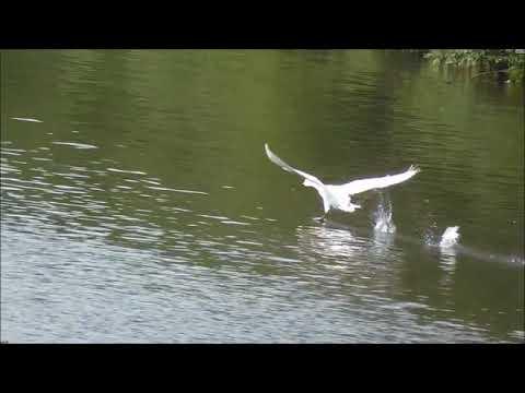 Kuğu Gölü - Modern Version (Official Audıo)