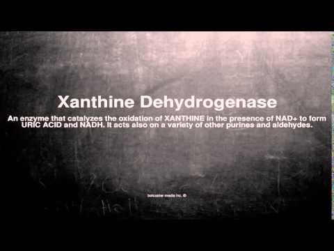 Medical vocabulary: What does Xanthine Dehydrogenase mean