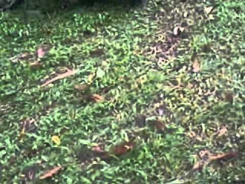 chines garden