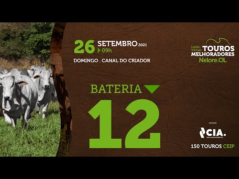 BATERIA 12 - LEILÃO VIRTUAL DE TOUROS 2021 NELORE OL - CEIP