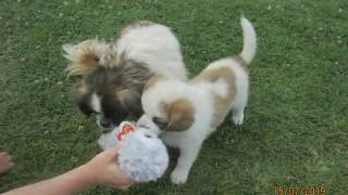 Северная Македония. Собаки не дохлые, они просто спят:)))))))))