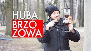 Herbata z hubą brzozową. Przepis na herbatę po Buriacku. Czajnikowy.pl