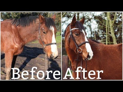 GIVING MY HORSE A MAKEOVER //