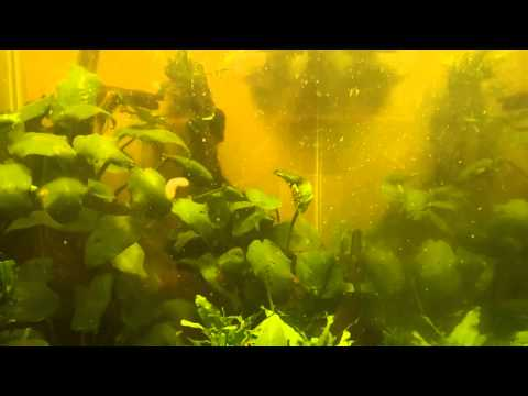 36hrs Mebendazol treatment afterwards with stream fish