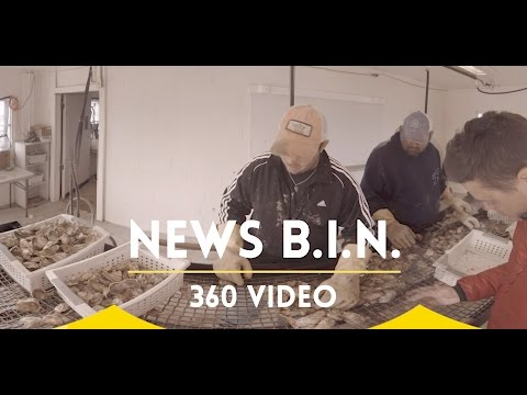 A New Beginning; Oyster Aquaculture [360 video]