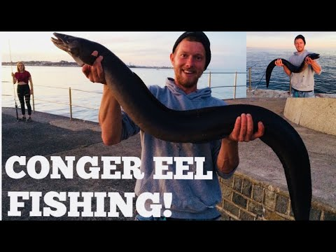 SHORE FISHING FOR CONGER EEL! Day Time Congers !