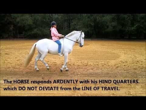 REIN-BACK.  THE WEIGHT and SEAT AID most important NATURAL RIDING AID.