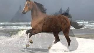 Konie-najlepsze zwierzęta na świecie ;p
