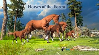 Horses of the Forest By Wild Foot Games Adventure iTunes Android
