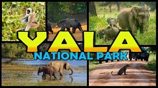 YALA NATIONAL PARK Safari - Sri Lanka (4K)