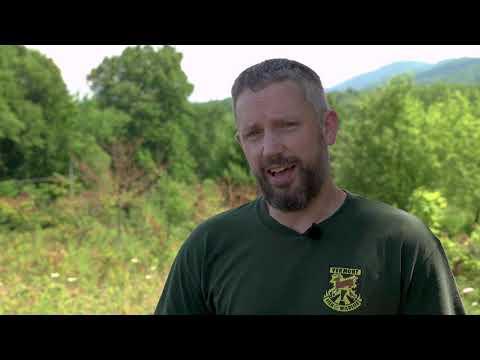 Overview Of The Deer Regulation Changes
