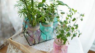 미세먼지 제거를 위한 테이블 연출 I 유리잔과 수경식물…