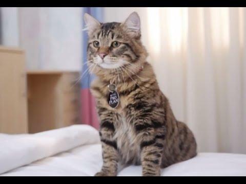 Все видео про кошек фото 427-77