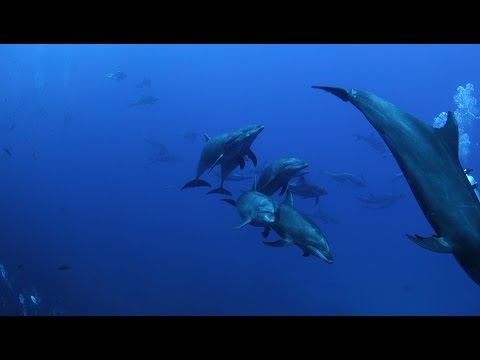 Socorro 2017 - Diving with Giant Manta Rays, Dolphins and Sharks HD - Mexico