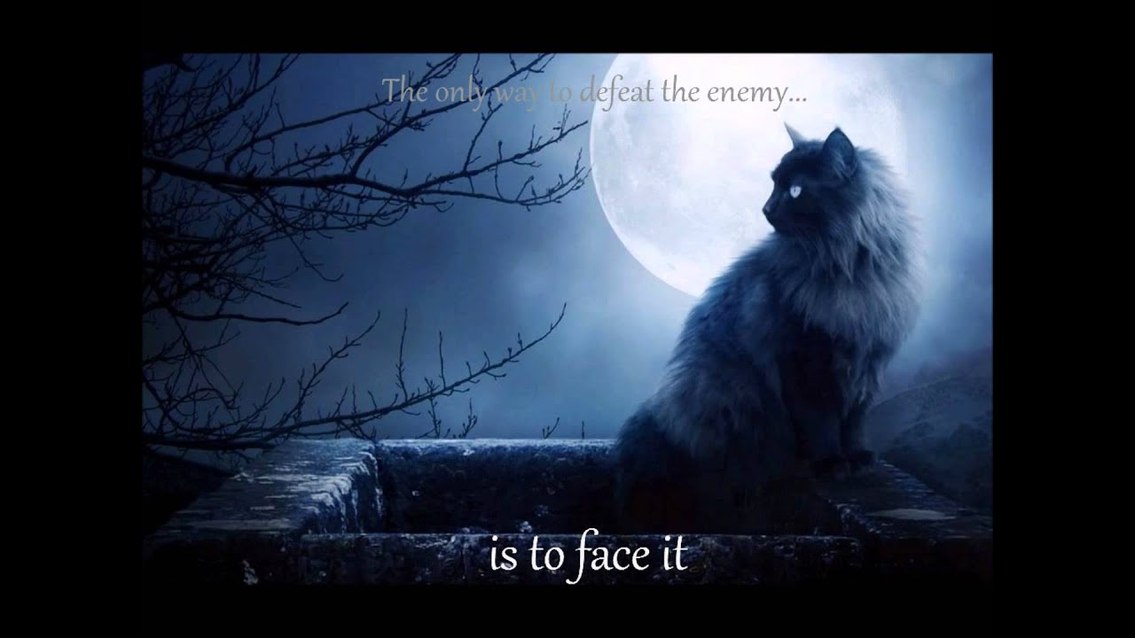 Warrior Cats Wallpaper With Quotes Warrior Cats Music Video Starclan I Ll Fly With You