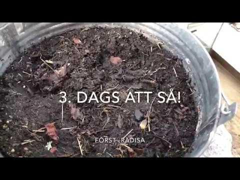Odla ätbart i hink på balkongen -så de här 3 redan nu i april