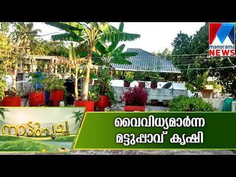 Variety Terrace farming   Manorama News