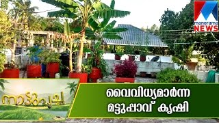 Variety Terrace farming | Manorama News