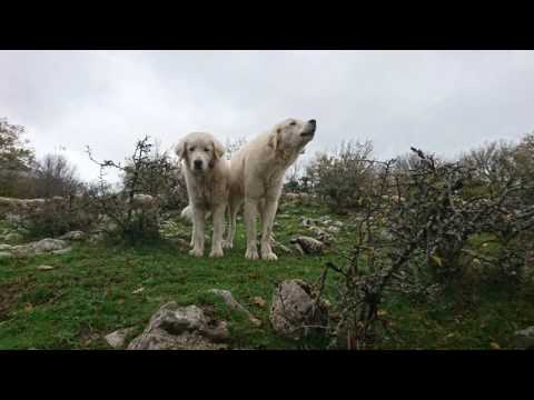 Morning Walk in the National Park of Abruzzo, Lazio and Molise in the Central Apennines (Part 1).